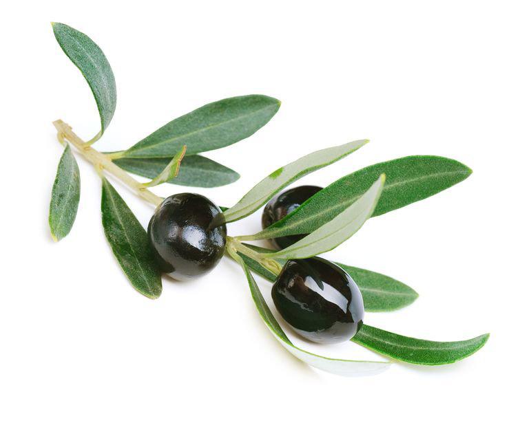 Olivenblaetter_oliveda_Naturkosmetik